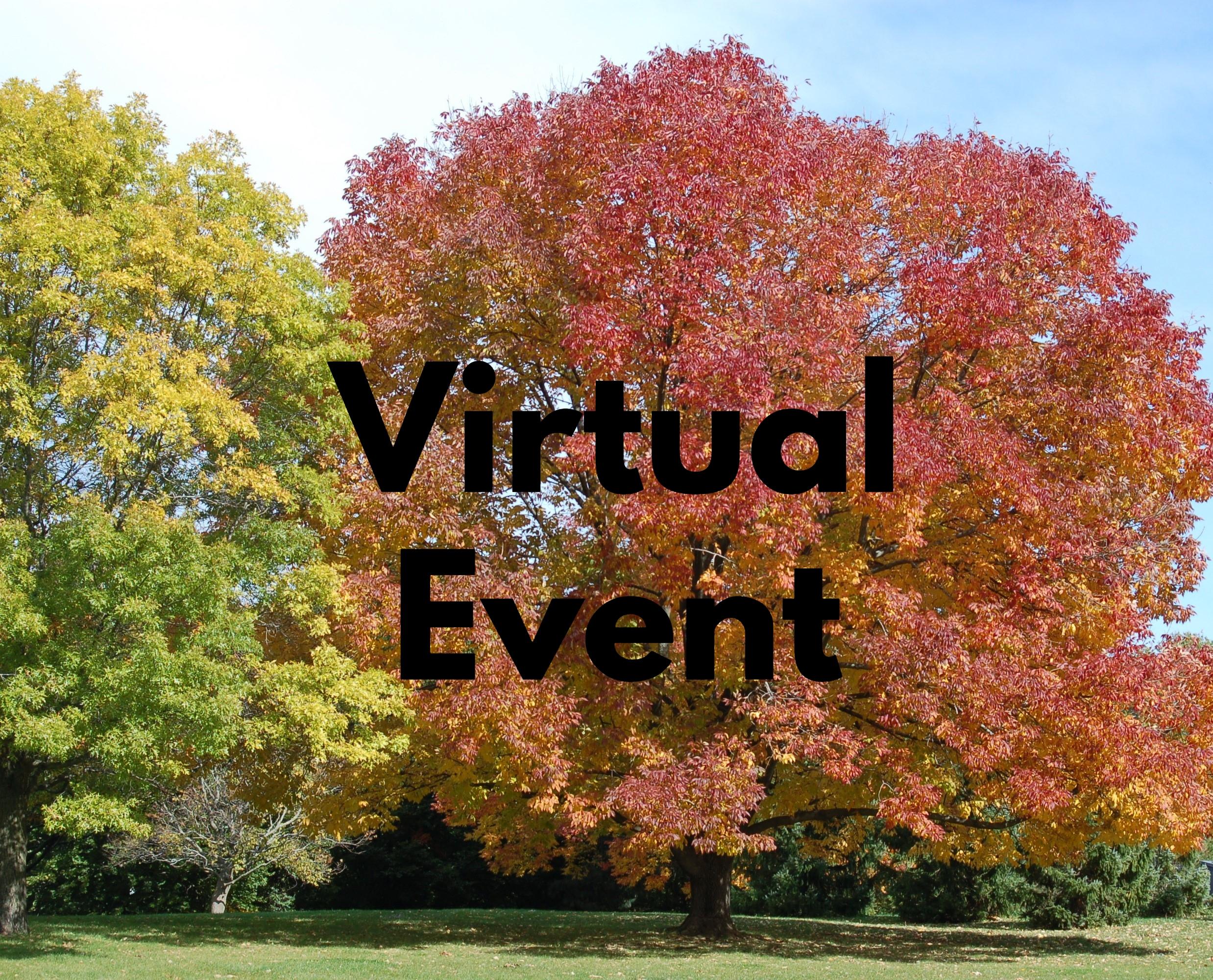 Virtual Pic